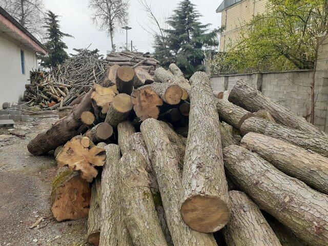دستگیری اعضای باند قاچاق چوب از جنگلهای کردکوی