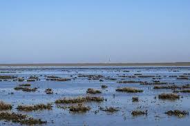 آمادگی لایروبی کانال های رابط خلیج گرگان با دریای خزر را داریم
