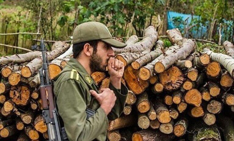 برداشت غیرقانونی از جنگل های علی آبادکتول متوقف شد